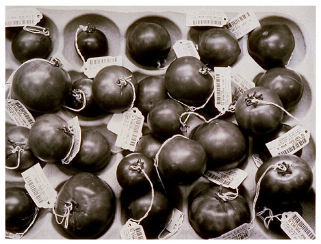 <p>Catherine F. Wagner, <em>Genetically Engineered Tomatoes</em>, 1994. Gelatin silver print. Henry Art Gallery, gift of Burt and Jane Berman, 2001.219. &copy; Catherine F. Wagner.</p>
