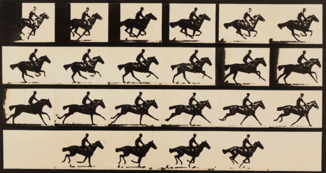 <p>Eadweard Muybridge, <i>Gallop; thoroughbred bay horse, Bouquet</i>, 1884 - 1885, published 1887. Collotype. Henry Art Gallery, Monsen Study Collection of Photography, gift of Joseph and Elaine Monsen, 79.124.</p>